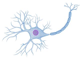 Nervenzellen mit C-Fasern